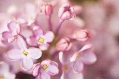 Lila Blume lizenzfreies stockbild