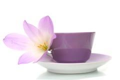 Lila Blume auf einem weißen Hintergrund Lizenzfreies Stockbild