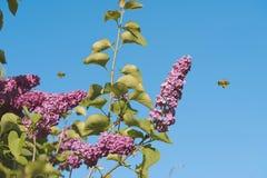 Lila Blume ower der blaue Himmel Lizenzfreie Stockfotos