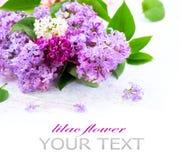 Lila Blumen über weißem hölzernem Hintergrund stockbilder