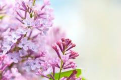 Lila Blumen lizenzfreies stockbild
