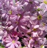 Lila Blumen Stockfoto