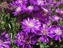 Lila Blumen Lizenzfreie Stockbilder