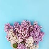 Lila Blumen Stockfotografie