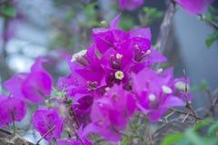 Lila Blumen Stockfotos