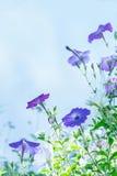 Lila Blumen auf dem Gebiet Stockfotos