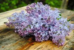Lila Blumen auf Holztisch stockbild