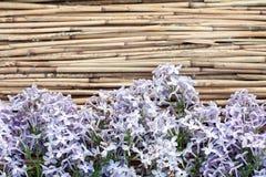 Lila Blumen auf trockenem Reedhintergrund Stockfotografie
