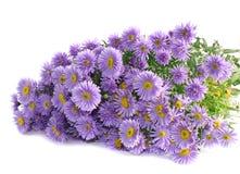 Lila Blumen des Blumenstraußes, getrennt. Stockbilder