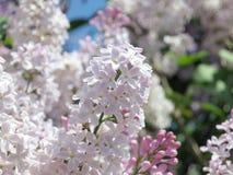 Lila Blumen - Foto auf Lager Stockfoto