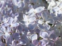 Lila Blumen - Foto auf Lager Lizenzfreie Stockfotos