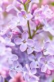 Lila Blumen schließen oben stockbild