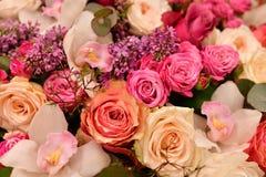 Lila Blumen und verschiedene Nahaufnahmen der Rosen stockfoto