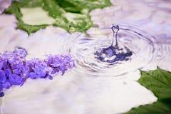 Lila Blumen unter den Tropfen des Regens Lizenzfreie Stockfotografie