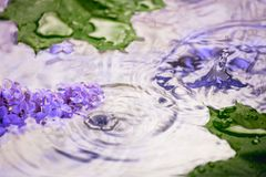 Lila Blumen unter den Tropfen des Regens Stockfotografie