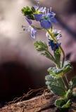 Lila-Blumennahaufnahme von der Front lizenzfreie stockbilder