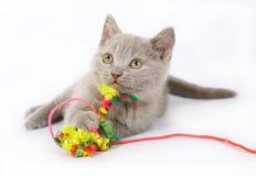 Lila britische Kätzchen mit Spielzeug Stockbild