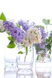 lila buketter Arkivbilder