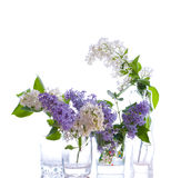 lila buketter Royaltyfria Bilder