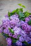Lila buske i blom i trädgården royaltyfri bild