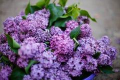 Lila buske i blom i tr?dg?rden royaltyfria bilder