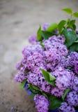 Lila buske i blom i tr?dg?rden royaltyfri bild