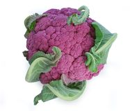 lila cauliflower Стоковое Фото