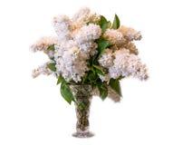 Lila común del blanco (syringa) en el florero aislado en el backgroun blanco Imagen de archivo