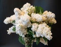 Lila común del blanco (syringa) en florero en fondo negro Imágenes de archivo libres de regalías