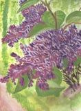 Lila de la primavera imagen de archivo