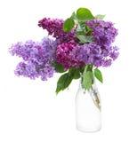 Lila en florero imagen de archivo libre de regalías