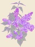 lila för illustration för design för bakgrundsfilial dekorativ Royaltyfria Foton
