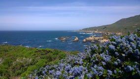 Lila för Kalifornien kustlilor Arkivfoton