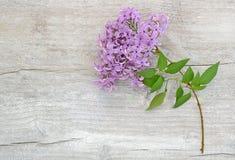 Lila filial på träbakgrund Arkivfoton