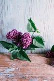 Lila floreciente en un viejo fondo de madera Foto de archivo