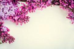Lila hermosa en un fondo blanco Imagen de archivo libre de regalías