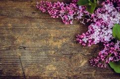 Lila horisontalbakgrund Royaltyfri Foto