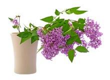 Lila i vasen som isoleras på vit Arkivfoto