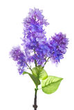 Lila künstliche Blume lokalisiert auf Weiß Lizenzfreie Stockfotos