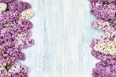 Lila kwiat granica na bławym tle Odgórny widok, odbitkowy sp Obraz Stock