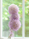 Lila Lauchblumen gegen das Fenster Stockbild
