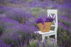 Lila lavendel blommar i en vide- korg Arkivfoto