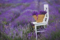 Lila lavendel blommar i en vide- korg Fotografering för Bildbyråer