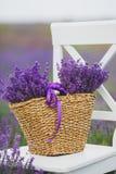 Lila lawenda kwitnie w łozinowym koszu Fotografia Stock