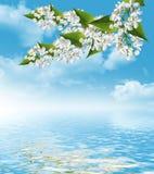 Lila Niederlassung auf einem Hintergrund des blauen Himmels mit Wolken Stockfotos