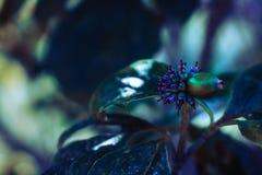 Lila- och gräsplanträdblomma Royaltyfria Foton
