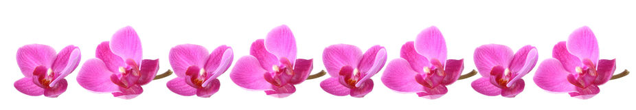 Lila orchid Arkivfoto