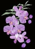 Lila Orchideeblumen auf schwarzem Hintergrund Stockbilder