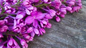 Lila púrpura foto de archivo libre de regalías
