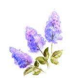 Lila pintada a mano de la flor de la acuarela Fotografía de archivo libre de regalías